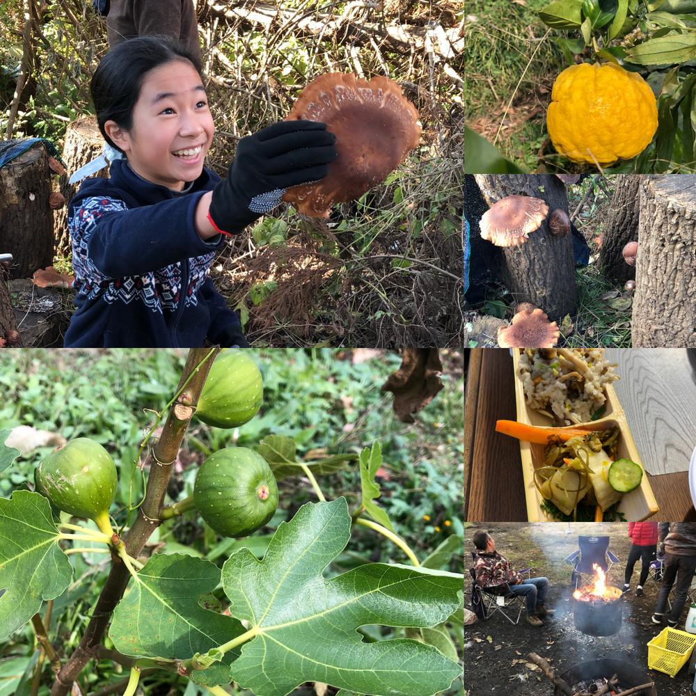 ミコノス横浜収穫体験イベントのご報告