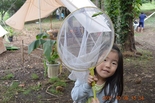 昆虫採集体験