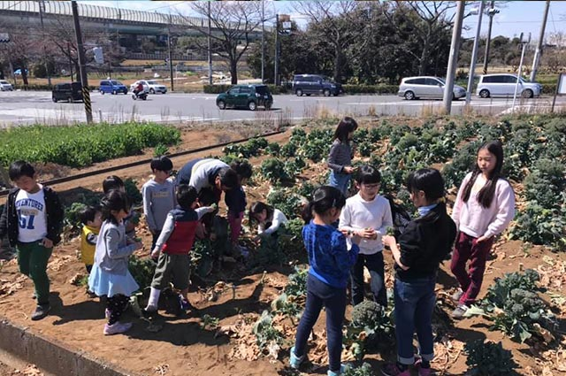 春野菜収穫体験